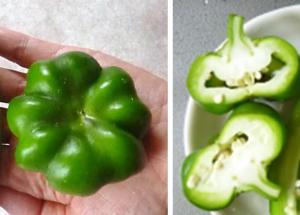 トマトパプリカ 緑色