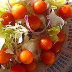 ミニトマト「ぺぺ」育てた感想!初めてでも簡単で病気しらずで多収穫が嬉しい