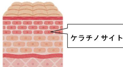 光や香りで皮膚角質の再生を早くできる