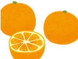 【食べたい】みかん白い筋は冷え症予防に!他にも栄養 効能を白澤卓二博士が紹介