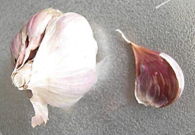 【貴重品種】大島赤丸ニンニクを初めて栽培して食べた 小ぶりで紫色が可愛い